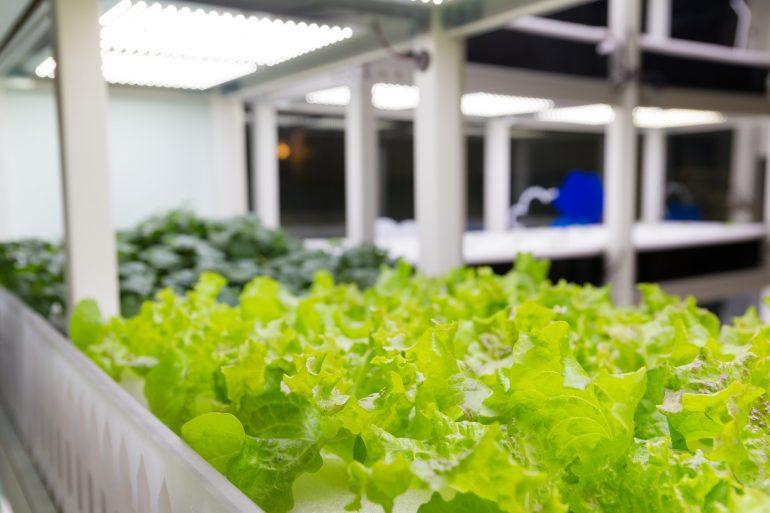 Zalety Korzystania Z Lamp Led Przy Uprawie Roślin Dom Bez